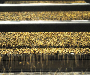 Hemp Grain Processing